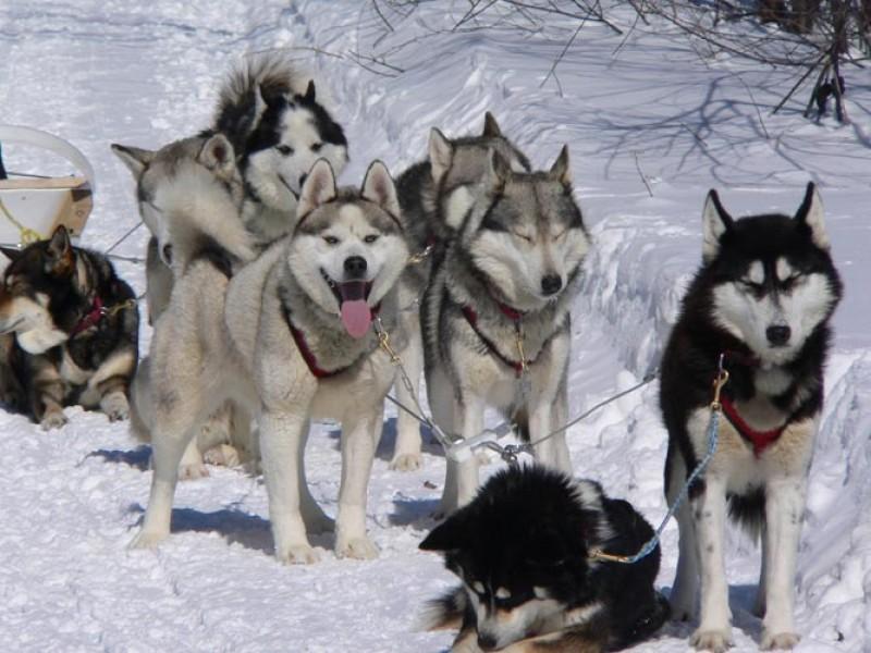 Raid en traîneau à chien, de 2 à 5 jours